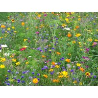 Blumenwiese Patch 1,20 m²